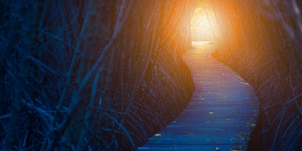 Light in the end of the dark tree tunnel. Hope and life